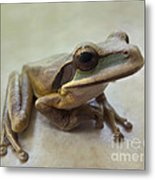 Tropical Tree Frog II Metal Print