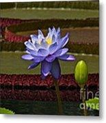 Tropical Water Lilies Metal Print
