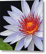 Tropical Waterlily Metal Print