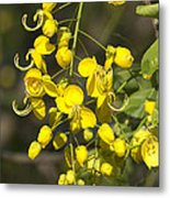 Tropical Yellow Flowers Metal Print