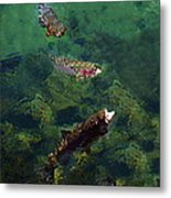 Trout Rising To Feed Metal Print