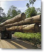 Truck With Timber From A Logging Area Metal Print