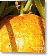 True Lemon Cucumber Metal Print