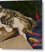 Trying To Catch The Fish Metal Print