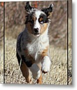 Tryptich Of Puppy Running Metal Print