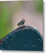 tThat fly on the wall Metal Print