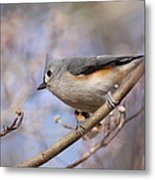 Tufted Titmouse - On The Slope Metal Print