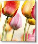 Tulip - Impressions 1 Metal Print