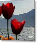 Tulip And Lake Metal Print