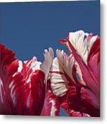 Tulip Estella Reinfeld Metal Print