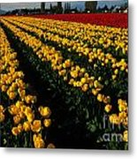 Tulip Fields Forever Metal Print