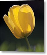 Tulip Flower Series 1 Metal Print