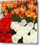 Tulip Flowers Festival Art Prints Floral Baslee Metal Print