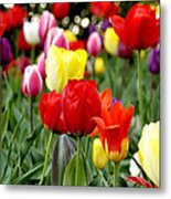 Tulip Garden University Of Pittsburgh  Metal Print