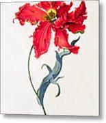 Tulip Perroquet Rouge Metal Print