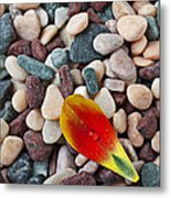 Tulip Petal And Wet Stones Metal Print