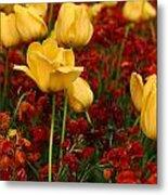 Tulip Sunshine Metal Print