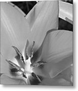 Tulip Up Close Metal Print
