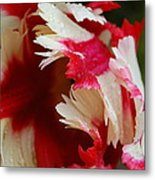 Tulips - Red And White Metal Print