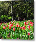 Tulips And Woods Metal Print