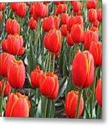 Tulips At Boston Public Garden Metal Print