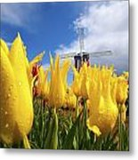 Tulips In A Field And A Windmill At Metal Print