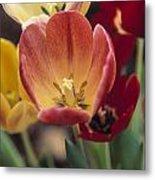 Tulips Metal Print by Juan  Silva