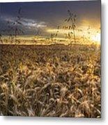 Tumble Wheat Metal Print