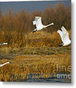 Tundra Flight Metal Print