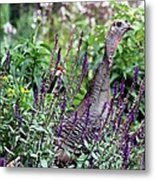Turkey Flowers Metal Print