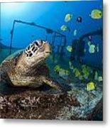 Turtle And Sealife Metal Print
