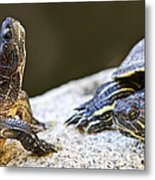 Turtle Conversation Metal Print