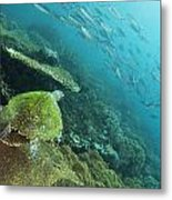 Turtle Eye View Metal Print