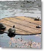 Turtle Family Beach Metal Print by Suzanne Gaff