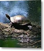 Turtle I Metal Print