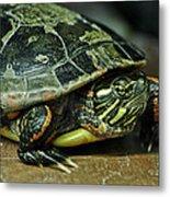 Turtle Neck Metal Print