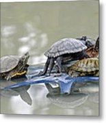 Turtle Pileup Metal Print