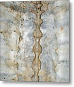 Turtle Spine Metal Print