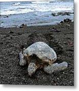 Turtle Tracks Metal Print by David Taylor
