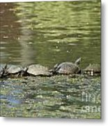 Turtle Traffic Jam Metal Print