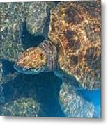 Turtle Underwater,high Angle View Metal Print