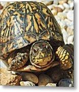 Turtle With Red Eyes On Rocks Metal Print