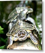 Turtles In A Row Metal Print