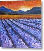 Tuscany Lavender Field Metal Print
