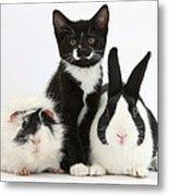 Tuxedo Kitten With Black Dutch Rabbit Metal Print