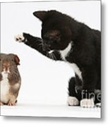 Tuxedo Kitten With Guinea Pig Metal Print