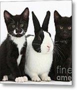 Tuxedo Kittens With Dutch Rabbit Metal Print