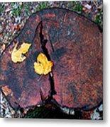 Twin Fallen Leaves Metal Print