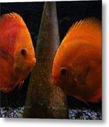 Twin Friends Malboro Fish  Metal Print