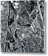Twisted Leaves Metal Print